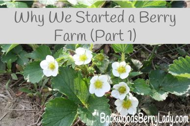 Why We Started a Berry Farm (Part 1)