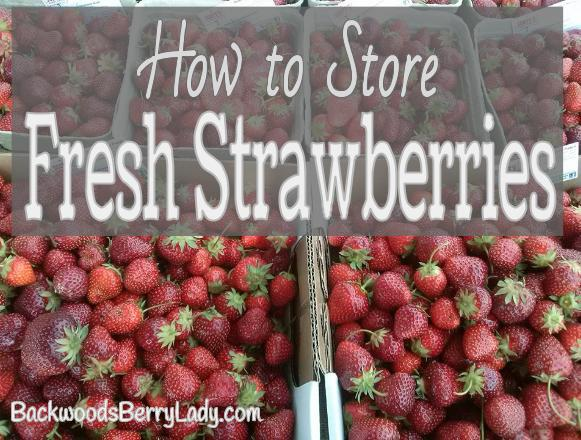 How to Store Fresh Strawberries